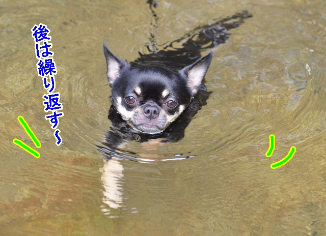 DSC_8141_2013080721392770f.jpg