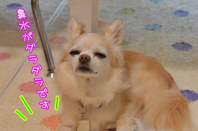 DSC_8336.jpg