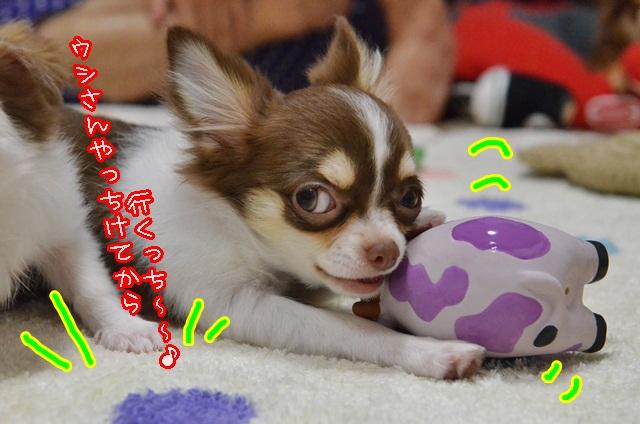 DSC_8403_201308201730311b4.jpg