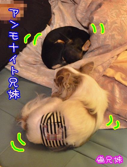 DSC_8637_20130828142916e9a.jpg