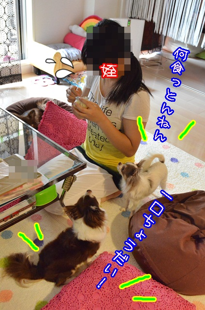 DSC_8793_2013090118281681f.jpg