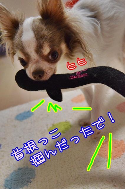 DSC_8869.jpg