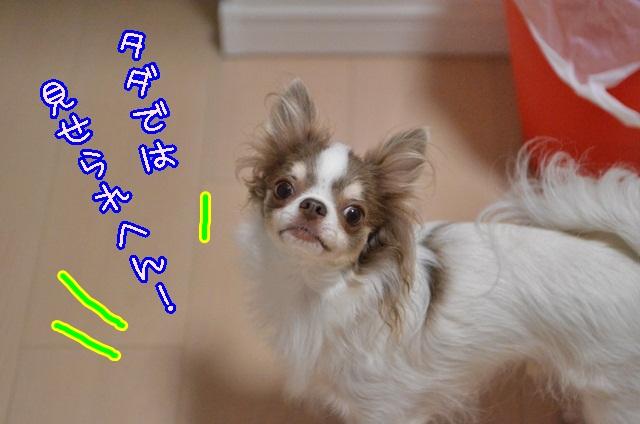 DSC_8881_201309201838263cb.jpg