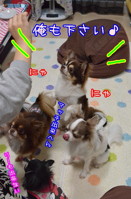DSC_8931.jpg