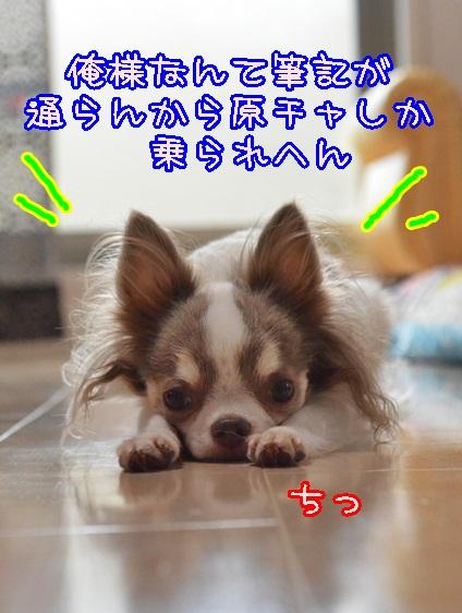 DSC_9022_20130908200009ef8.jpg