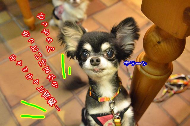 DSC_9079_20130911112952cf9.jpg