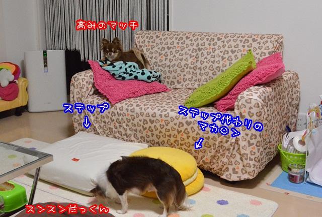 DSC_9215_20130923184543d80.jpg