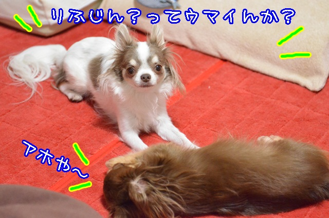 DSC_9467_20130930192659183.jpg