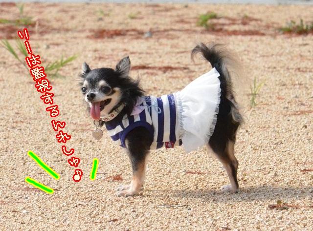 DSC_9486_20131002204836039.jpg