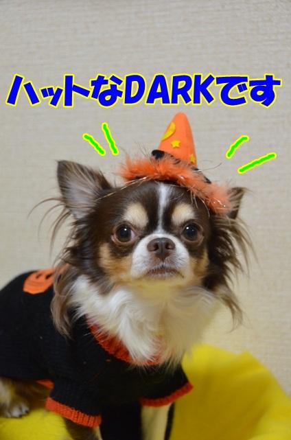 DSC_9539.jpg