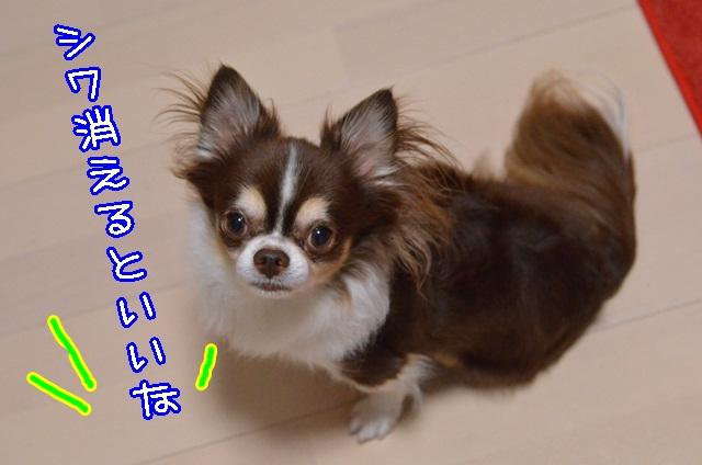 DSC_9575_20131005193915d2d.jpg