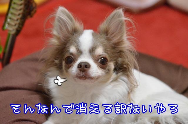DSC_9576_2013100519391741d.jpg