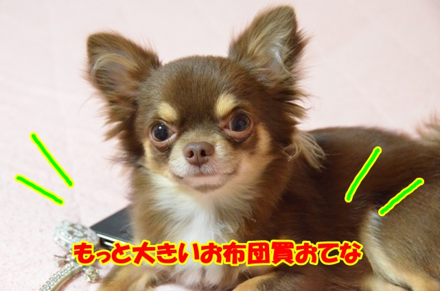 DSC_9582.jpg