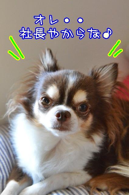 DSC_9586_20131011190512a83.jpg