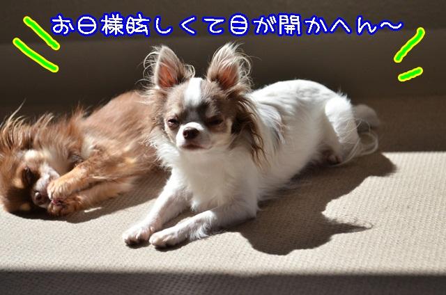 DSC_9592_20131006195253c66.jpg