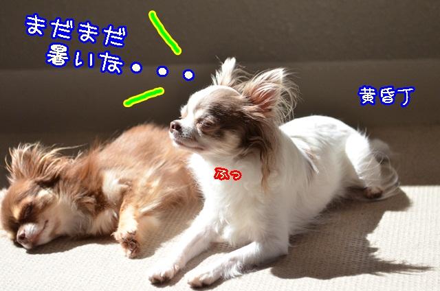 DSC_9596_20131006195359bdf.jpg