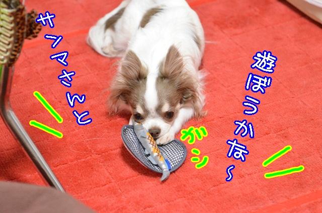 DSC_9611_20131018183548ee8.jpg