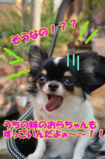 DSC_9652.jpg