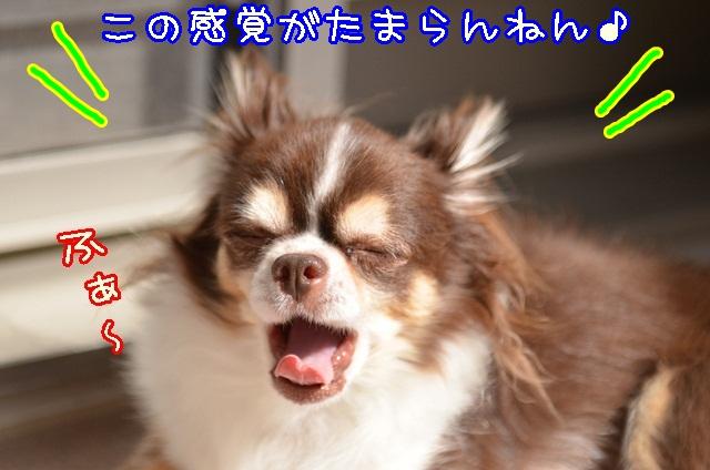 DSC_9671_201310142009325da.jpg