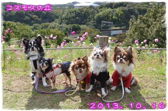 DSC_9739_201310161730135cc.jpg
