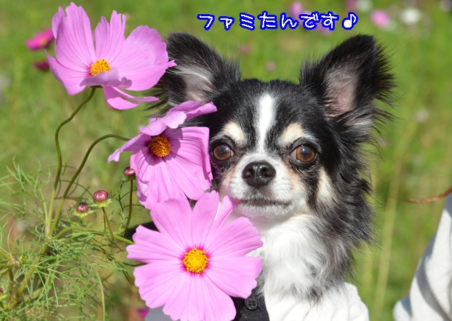 DSC_9769_20131016173044ff8.jpg