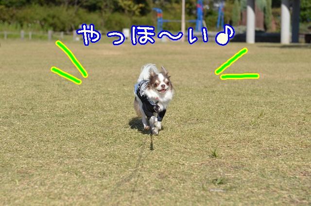 DSC_9791_201310171250007f6.jpg