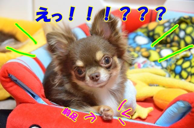 DSC_9838.jpg