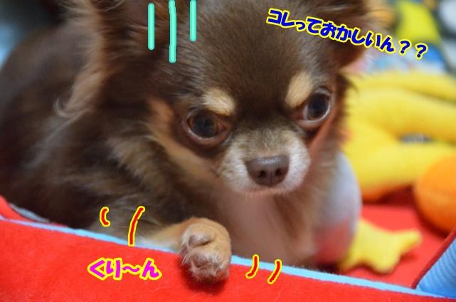DSC_9841.jpg