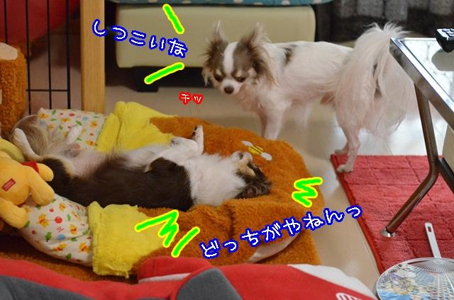 DSC_9856_20131103150041613.jpg