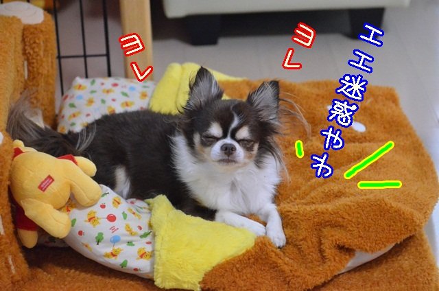 DSC_9860_20131103150101f9c.jpg