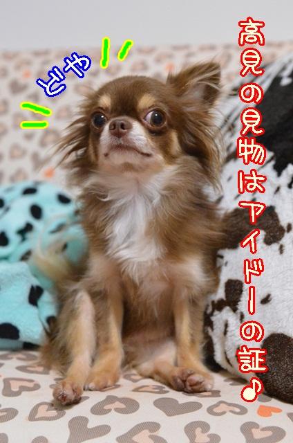 DSC_9864_201310221411162f6.jpg