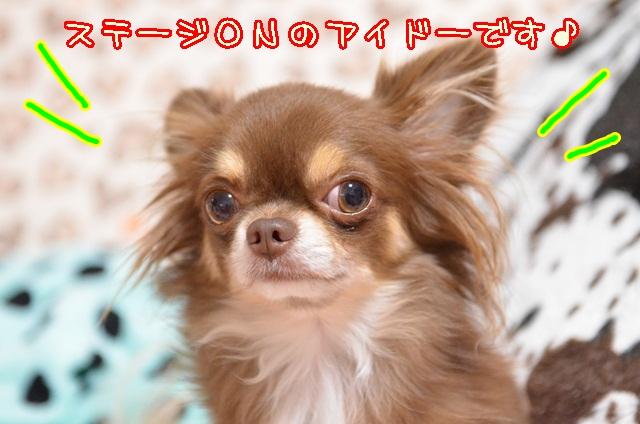 DSC_9870_20131022141118e42.jpg