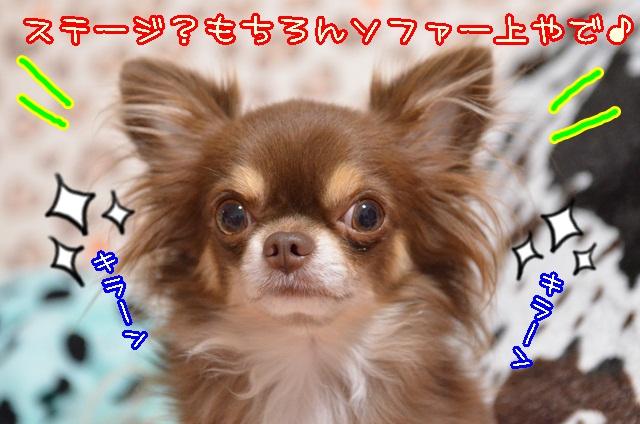 DSC_9871.jpg