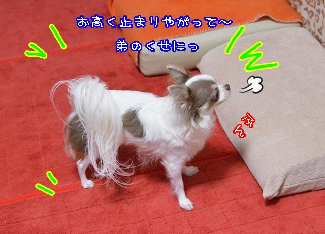DSC_9877.jpg