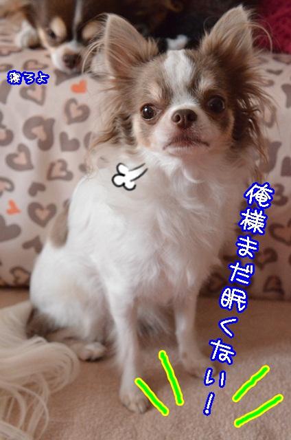 DSC_9901.jpg
