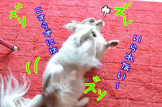 DSC_9927_201310241454369b0.jpg