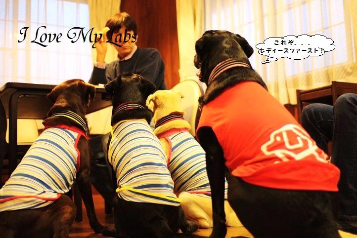 IMG_9838 (2)Irago 2011-12-03