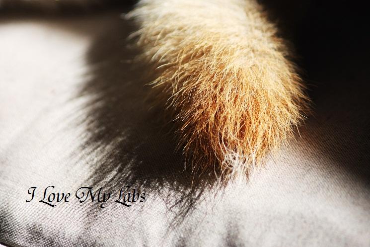 IMG_9815 (2)2011-12-01