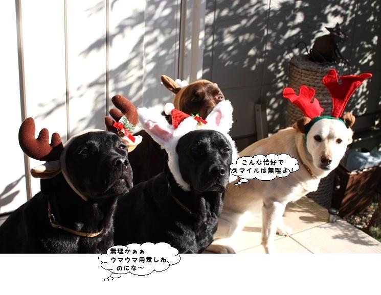 IMG_0163 (2)Christmas