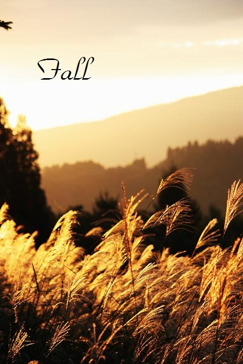 IMG_4122 (2)fall