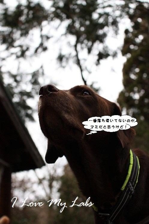 IMG_0074Nasu Kougen