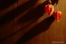 銀行ロビー展 ~飛騨古川 三寺まいり 2011写真撮影記 千本ロウソク、灯篭流し~01
