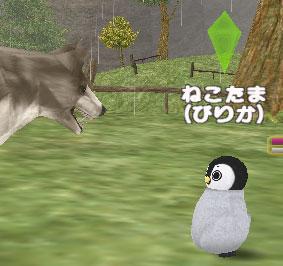 ピリカペンギン34