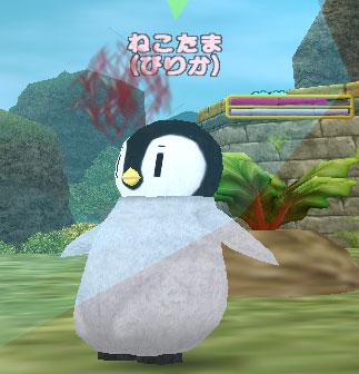 ピリカペンギン40
