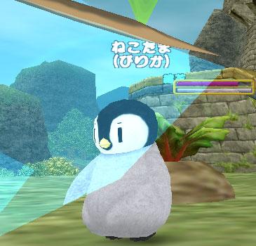 ピリカペンギン41