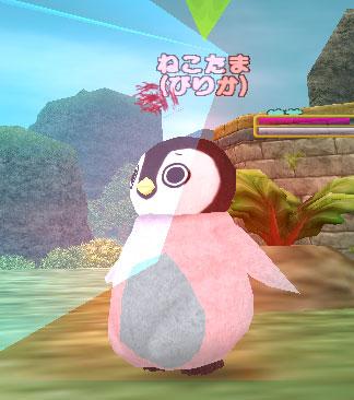 ピリカペンギン42