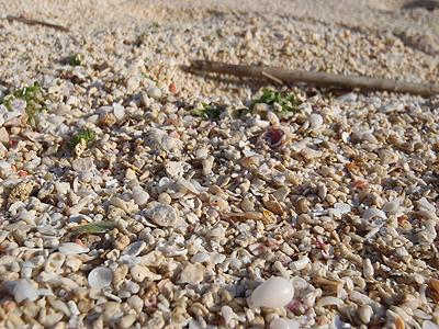 トロピカルビーチ_おっきいビーチ02
