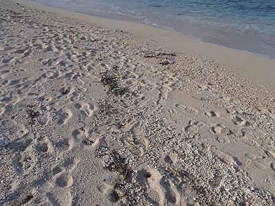 トロピカルビーチ_小さいビーチ02
