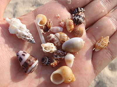 トロピカルビーチ_小さいビーチの採集結果