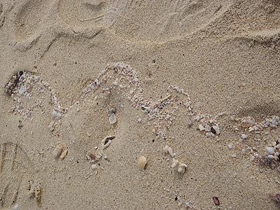 名護のビーチ_打ち上げ帯02